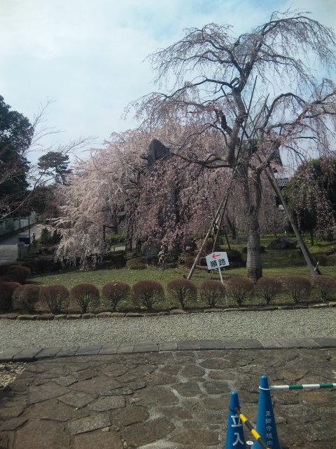 東郷寺は見頃ですね。