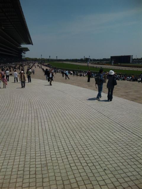 東京競馬場にきました。
